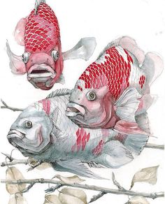 Since we've been the go-to site for watercolor techniques, watercolor painting ideas & watercolor tutorials. Fish Illustration, Watercolor Illustration, Watercolor Paintings, Illustrations, Watercolor Paper, Animal Sketches, Animal Drawings, Art Sketches, Fish Drawings