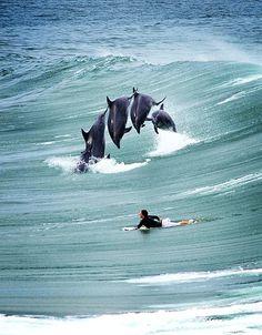 Amazing Shot!! ~ Surfing by Lambda03