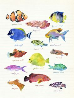 Nature - marcel george illustration - Lovely watercolor fish on ruled notebook paper. Watercolor Fish, Watercolor Animals, Watercolor Illustration, Watercolor Paintings, Art Paintings, Gouache Painting, Illustrator, Sea Art, Sea Life Art
