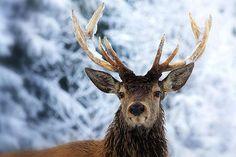 VIEW Fotocommunity: Tiere im Schnee