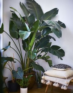 Large tall house plants for sale houseplant low light indoor good houseplants . tall indoor plants safe for pets Interior Plants, Interior And Exterior, Interior Garden, Tropical Interior, Interior Design, Design Interiors, Tropical Decor, Large Indoor Plants, Indoor Palms