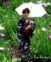 Campo de flores de íris