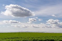 Field of potatoes with clouds in sky by Zigzag Mountain Art on Creative Market