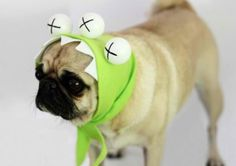three-eyed monster DIY dog costume, see more at http://diyready.com/diy-dog-costume-ideas-halloween-fun-for-your-pooch