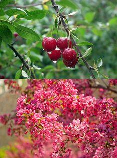 💚 Każdy ogród składa się głównie z dwóch rodzajów roślin: owocowych oraz ozdobnych  🤔 Jakiego typu roślin jest więcej w Waszym ogrodzie❓  #drzewaowocowe #krzewyowocowe #drzewaozdobne #krzewyozdobne #rosliny #ogród Fruit