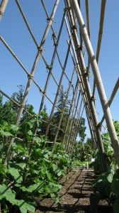 Vertical Supports in the Vegetable Garden