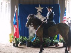 Puerto Rican Paso Fino horse
