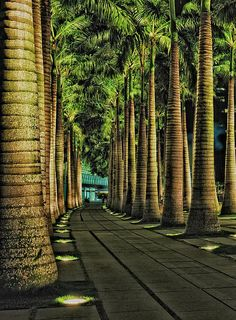 ✮ Singapore Fullerton Harbour walk has rows and rows of beautiful Palm tree pathways Travel Honeymoon Backpack Backpacking Vacation Landscape Architecture, Landscape Design, Garden Design, Tropical Landscaping, Backyard Landscaping, Places To Travel, Places To Visit, Singapore Travel, Wanderlust Singapore