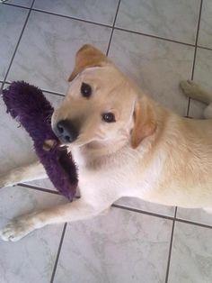 Ozzy my blonde friend :-) dog