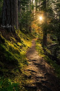Into the Light, a Scotland woods passage