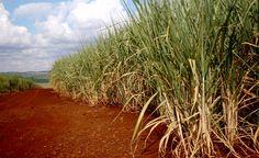 As consequências do desenvolvimento da agricultura para o meio ambiente
