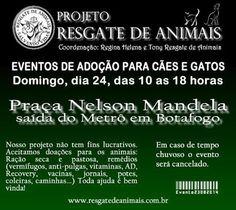 Bonde da Bardot: RJ: ADOÇÃO DE ANIMAIS NESTE DOMINGO (24/08) EM BOT...