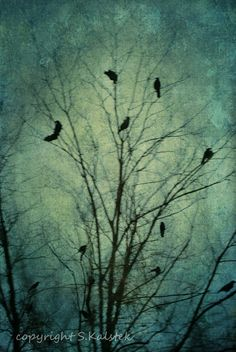 Crow Photograph Tree with Black Birds Nature Surreal Tree Wall Art  Muted Blue The Bewitching Hour 4x6 Photography