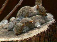 bundle of squirrels