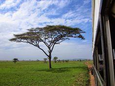 O Serengeti, do ponto de vista geográfico, corresponde a um ecossistema vasto que se estende na África Oriental desde o norte da Tanzânia até ao sudoeste do Quénia, cobrindo uma extensão de cerca de 40 000 km2. Na Tanzânia, este ecossistema deu origem ao Parque Nacional de Serengeti e a várias reservas de caça, ao …