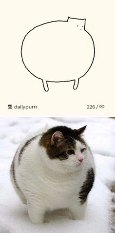 10+ Times 'Stupid Cat Drawings' Made Everyone Laugh With How Accurate They Were Dumb Cats, Stupid Cat, Funny Cat Videos, Funny Cat Pictures, Funny Labs, Cat Sketch, Try Not To Laugh, Big Bear, Cat Drawing