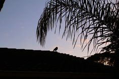 Bird on roof at early sunrise