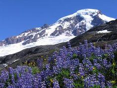 Mt Baker, Heliotrope Trail, Glacier WA