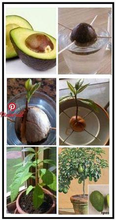 "Plant Plants Source of marinascheele "","" pinner "": {"" username "":"" kyra2364 "", ...   | Tree |  #kyra2364 #marinascheele #pinner #plant #plants #source #username"