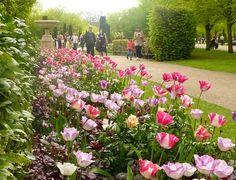 The Regent's Park in London. We do love some springtime flowers.