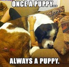 Doggies, Puppies, Animals, Little Puppies, Cubs, Animales, Animaux, Pet Dogs, Animal