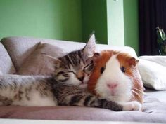 You're my favorite pillow...