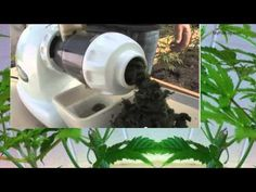 Video Journal of Juicing Cannabis with clips of Dr William Courtney speaking on the many health benefits of CBD and THC.  Medical Marijuana in the smoked form provides some medicinal benefit to all recreational users, but the non-psychoactive form of THC Acid and CBD Acid allow much higher doses and far greater medicinal value, while avoiding the side-effect of getting high.  Marijuana Facts, Cannabis Facts. Benefits of Medical Marijuana, THC Acid, CBD Acid  Medical Cannabis Journal With F