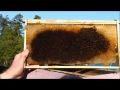 Winter Losses - what starved bees look like.....