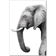 Introduce natural majesty into your décor with the J&M Furniture Acrylic Art Tusk. The elephant silhouette depicted in this photographic image is highly detailed. It's printed onto acrylic canvas, lending crisp lines and stark contrasts. Elephant Photography, Wildlife Photography, Animal Photography, Photography Props, Elephant Canvas, Elephant Love, Elephant Wall Art, Elephant Sketch, Asian Elephant