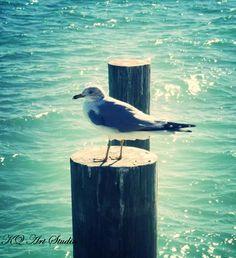 Seagull photo facing left