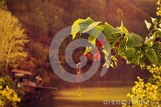 autumn-leaves-autumn-landscape-background-play-lights-autumn-lake-shore Autumn Lake, Lake Shore, Landscape Background, Nature Photos, Leaves, Lights, Play, Light Fixtures, Lighting