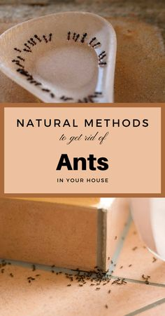 It requires a heavier workaround to keep them away forever. These being said, keep reading this article and find out some of the strongest and natural methods you should use to get rid of ants in your house! Cleaning Wood, Cleaning Day, Cleaning Hacks, Cleaning Products, Cleaning Solutions, Diy Cleaners, Cleaners Homemade, Natural Treatments, Natural Remedies