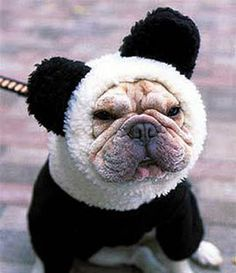 dog in a panda suit.