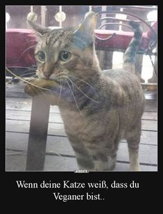 opas adolf hitler katze lustige katzenbilder witzemaschine bilder pinterest humour. Black Bedroom Furniture Sets. Home Design Ideas