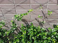 jacob inox wire climbing plants - Google Search