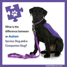 Autism Dogs - information to review