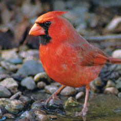 Build a Simple Bird Water Garden  Bird baths attract and keep birds healthy.