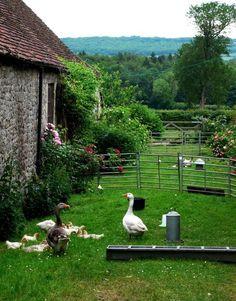 Schöner Garten in Frankreich