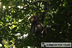 Chimp in Kyambura Gorge! For more information on Uganda's National Parks and Reserves, please visit our website.