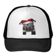 Horses in Santa Claus Hats
