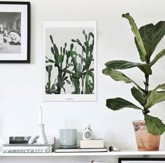 Fiddle leaf fig plants look fabulous in any home. We've got a few tips on how to care for your fiddle leaf fig plant! Inspiration Wand, Decoration Inspiration, Interior Inspiration, Living Room Update, Home And Living, Home Interior, Interior And Exterior, Ficus Lyrata, Ideas Hogar