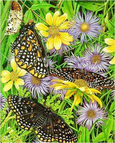 Butterflies Fly - Karen Lloyd-Jones ( Australia)