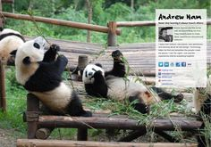 Andrew Nam's page on about.me – http://about.me/andrewnam