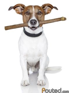 Click the Dogs PIN to watch our amazing Funny Pet Videos and we would love you to follow our boards.  http://funnypetvideos.net