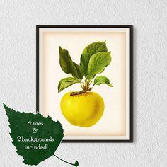 Kitchen wall art, Fruit poster, Botanical print vintage, Apple art, Antique wall art, Apple print, Digital download print, Illustration, #24