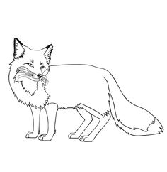Fox Coloring Pages Free Printable Face Red Stone Webkinz And Hound For Kids Adults Preschoolers