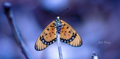 """I call this """"Butterfly Nangkring"""""""