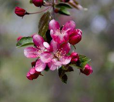 Shot by @walkwithmaria at Norfolk botanical garden
