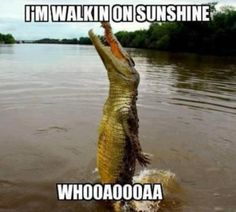 """Laughed at this almost as hard as the """"Yisssss butterfliiiiies"""" alligator."""