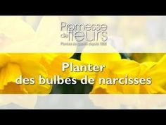 Promesse de Fleurs - YouTube Narcisse, Comment Planter, Planters, Gardens, Daffodils, Yellow Flowers, Tips, Spring, Plant